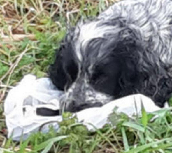 Paul Skinner Spots Dog's Emotional Moment On Side Of Road