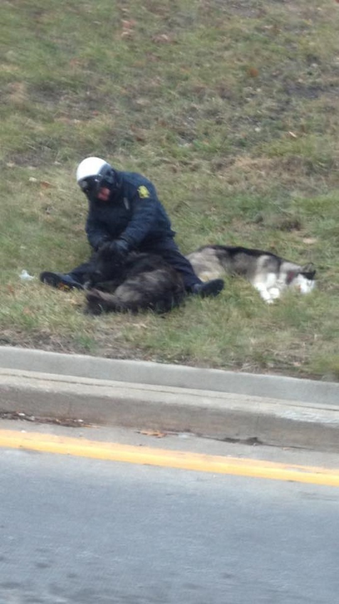 Debbie Davis Snaps Photo Of Cop Helping 2 Dogs On Side Of Road