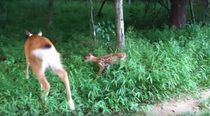 """Amy Carrickhoff Yells """"Little Girl"""" Into Woods, Deer Runs Toward Her"""