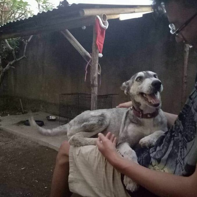 Abused Husky Looks Like Skeleton, Unrecognizable 10 Months Later