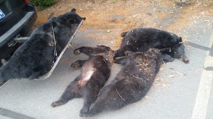 Officials Discover What Really Happened To Four Bears Found Dead At Church