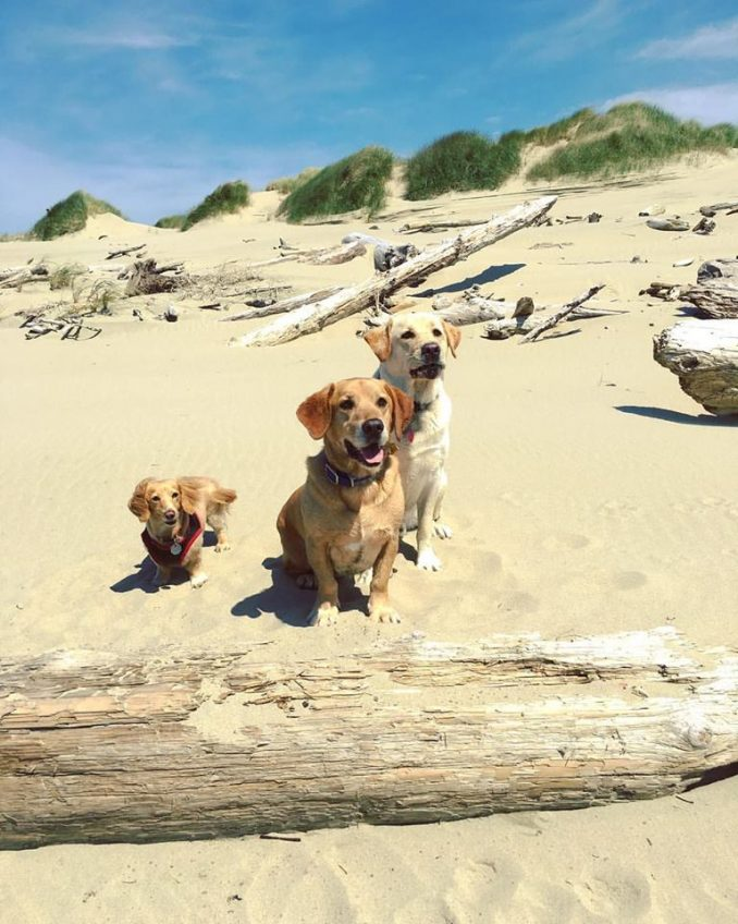 Matt McMichael Ties Puppy Muzzle Shut To Stop Barking, Brags About It