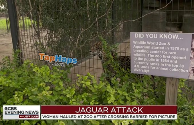 jaguar attack