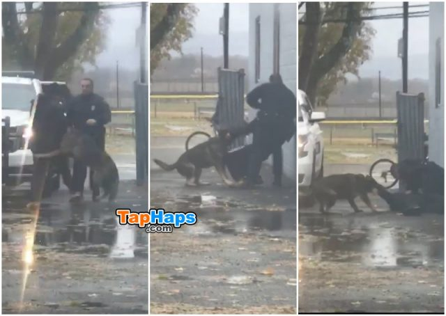 Officer Roman Scuadroni Guy Punches Police Officer Then Learns Hard Way That Cop Has K9 Partner